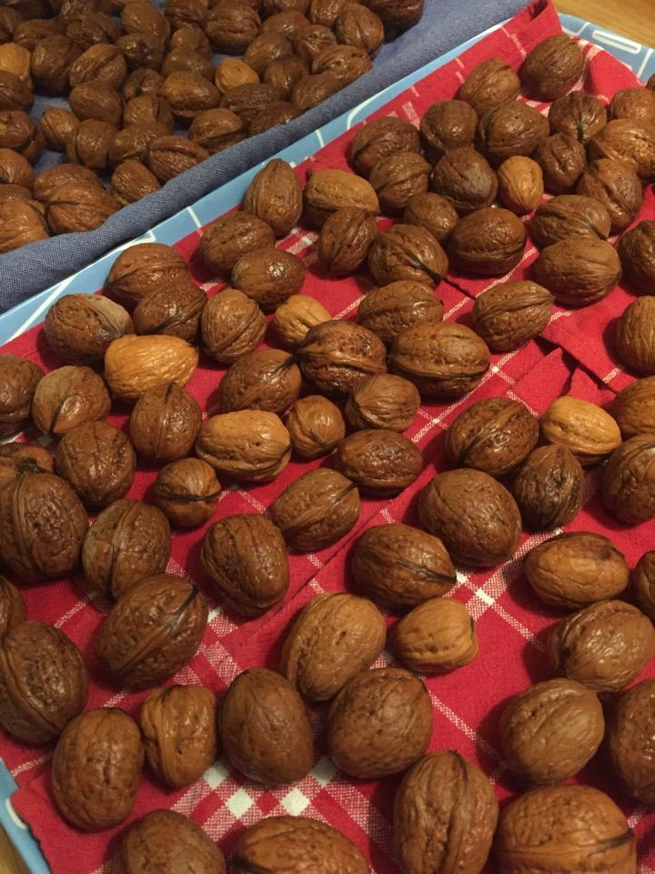 Valnötter